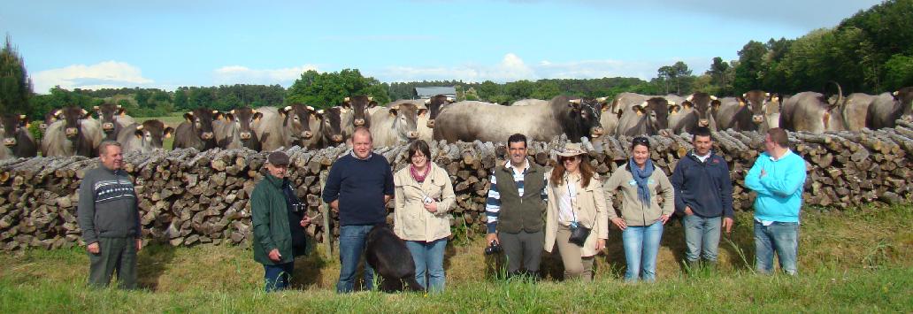 Les éleveurs étrangers en visite sur un troupeau de bazadaises - Aquitanima Tours 2014