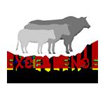 Logo Excellence Bazadaise